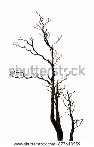 Dry trees on white background #677613559