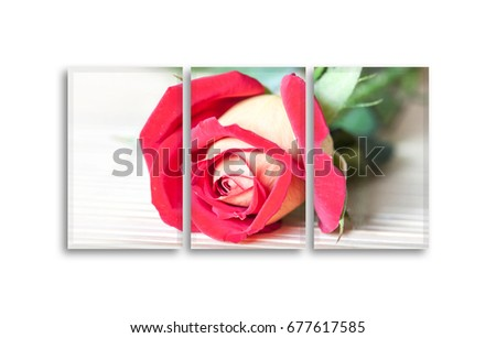 Frames set with beautiful red rose picture. 3 piece photographic print canvas mock up, floral decor