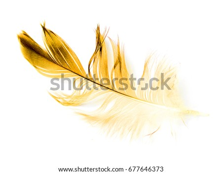 bird feather on white background #677646373