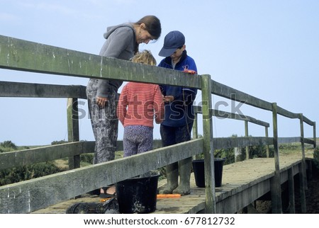 Europe UK Norfolk Blakeney Marsh 2003. Mother with children standing on wooden bridge. Caucasian children playing and fishing for crabs. #677812732