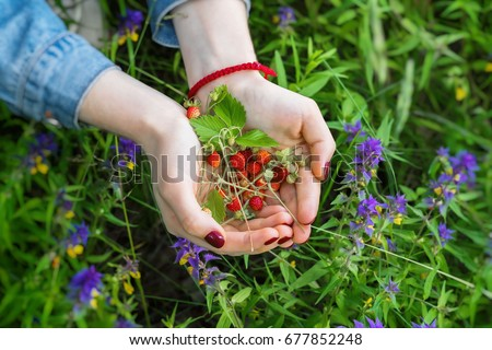 Handful wild Fragaria vesca, commonly called wild strawberry, woodland strawberry, palms of girl close-up. Concept of seasons, ecology, detox, Detox, vegetarianism, healthy lifestyle, green planet #677852248
