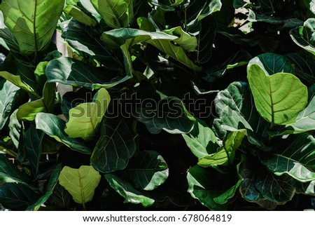Green leaves tropical background #678064819
