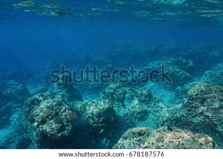 Underwater landscape rocky seabed with corals on the outer reef slope, Pacific ocean ,Moorea, French Polynesia #678187576
