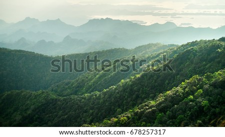 beautiful landscape nature of rain forest and mountain background. abundance evergreen forest and foggy in spring. 