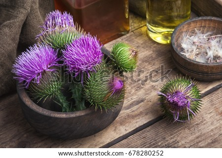 Wild medicinal plant thistle on wooden background.Milk Thistle plant #678280252