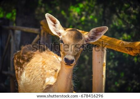 Deer in a sunny forest. Summer landscape #678416296