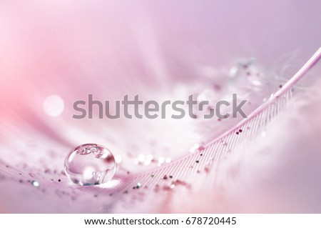 Feather pink bird with sparkles and transparent drop of dew water sparkles in the rays of bright light close-up macro. Glamorous sophisticated airy artistic image on a soft blurred background #678720445