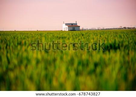 Rice field in Valencia #678743827