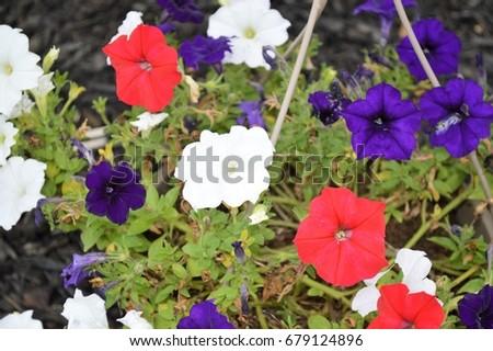 flowers #679124896