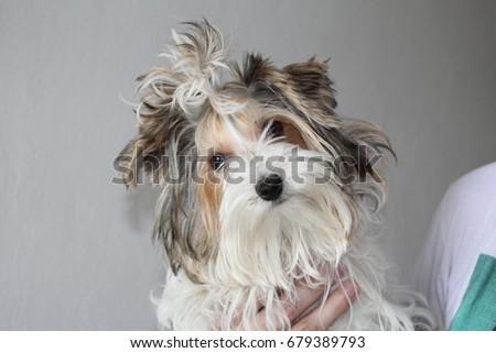 Hairy dog #679389793