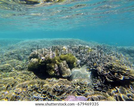 coral reef #679469335