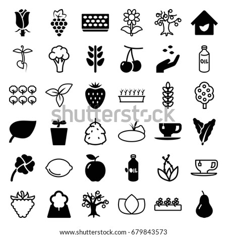 Leaf icons set. set of 36 leaf filled and outline icons such as apple, pear, cherry, grape, spinach, oil, hand with seeds, tea cup, pot for plants, plant in pot, rose, plant #679843573