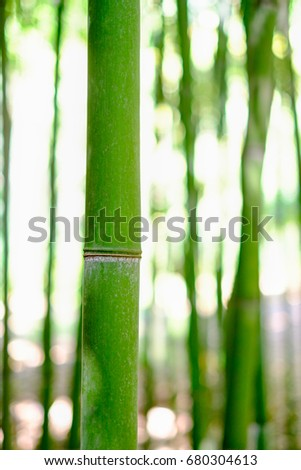 Bamboo stalks in forest background with sunny day #680304613