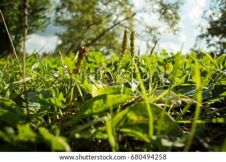 Grass in summer #680494258