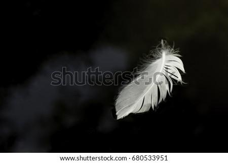 White Feather #680533951
