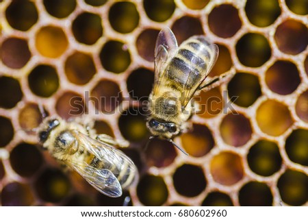 bees on honeycomb in apiary in the summertime #680602960
