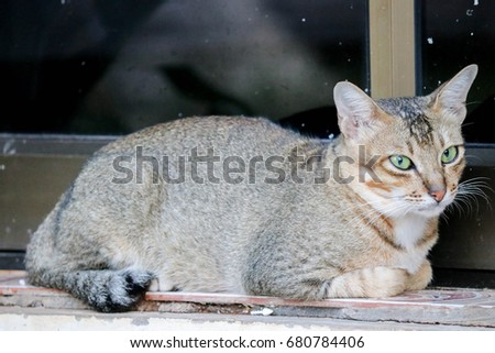 The cat in temple of Thailand #680784406