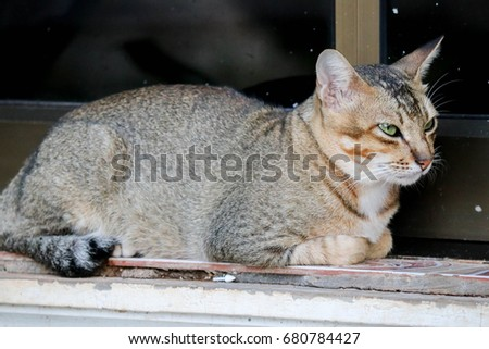 The cat in temple of Thailand #680784427
