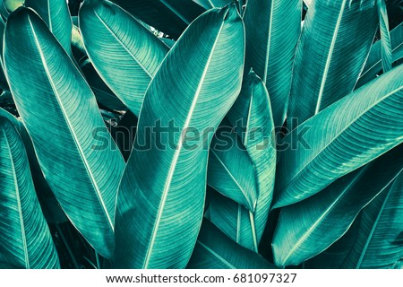 tropical leaves #681097327