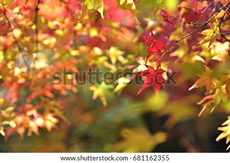 Colorful autumn leaves in Japan #681162355