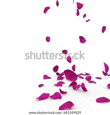 Violet rose petals fall to the floor. Isolated background #681249829