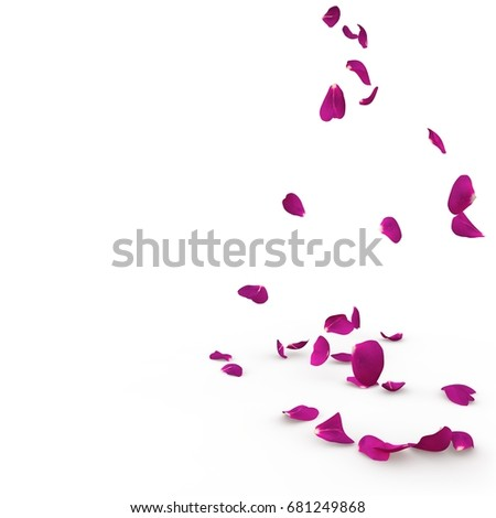 Violet rose petals fall to the floor. Isolated background #681249868