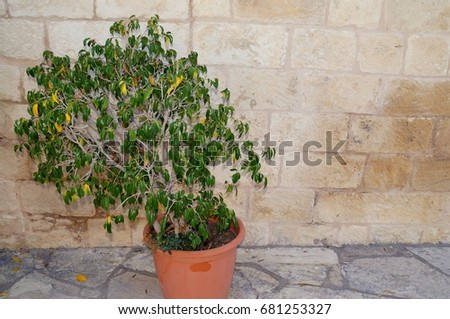 Stone wall with greenery. Texture of nature. Background for text, banner, label. #681253327