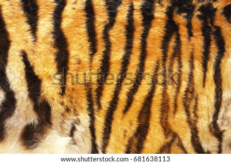 pattern of siberian tiger, texture of real leather