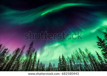 Purple and green Northern Lights in wave pattern over trees