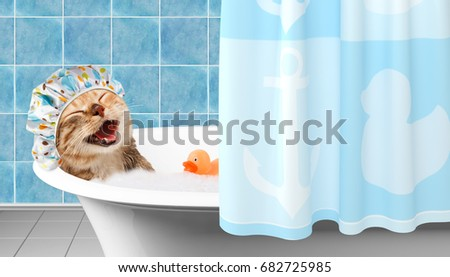 Funny cat is taking a bath with toy duck. #682725985
