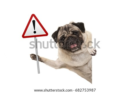 smiling pug puppy dog holding up red warning, attention traffic sign, isolated on white background Royalty-Free Stock Photo #682753987
