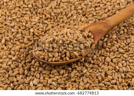 Spelt grain (dinkel wheat) on a spoon and background #682774813