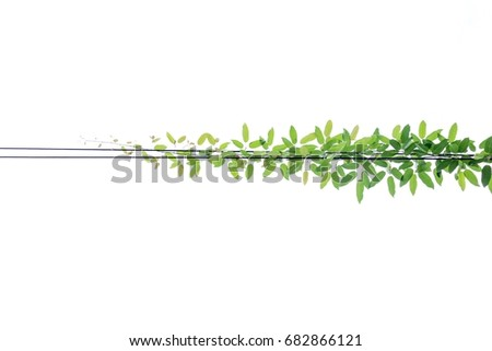 Tree leaves ,Green leaf pattern on wire isolated on white background #682866121