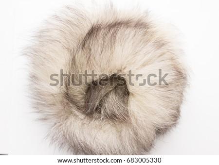 The fur of a Arctic,  polar fox Fox. Texture. Stock photo Top view. Close-up