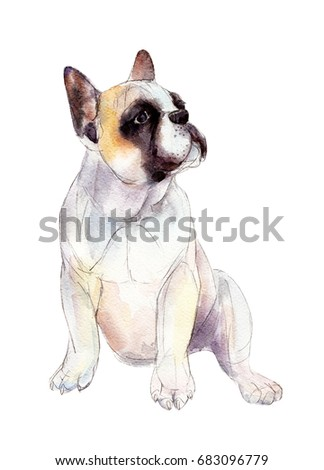 French bulldog isolated on white background, watercolor illustration.