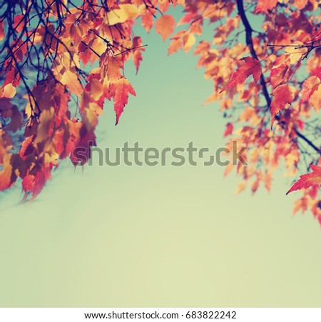 Colorful Autumn Leaves against blue sky #683822242