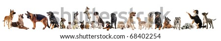 group of dogs, puppies and cats on a white background #68402254