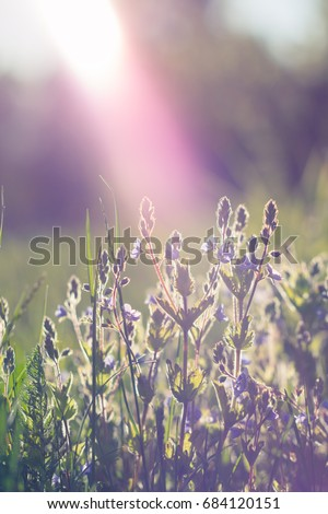 Spring background with beautiful violet flowers. Closeup #684120151