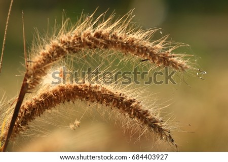Grass flower in nature #684403927