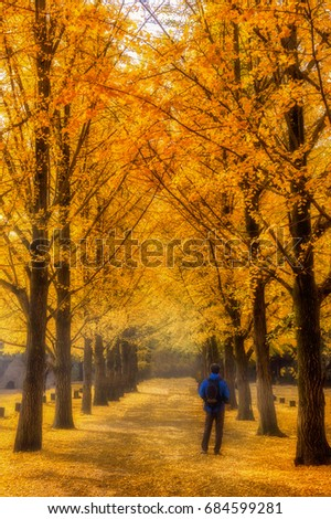 Nami island in the fall and leaves are changing colors,korea #684599281