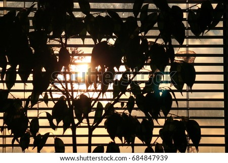 leaves of plant in contrast sunlight through window jalousie  with shades #684847939