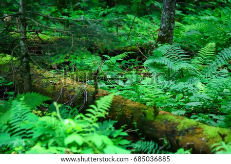 Scenic panorama of green forest thicket in summer #685036885