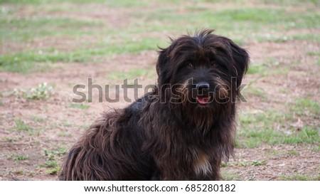 dog  #685280182