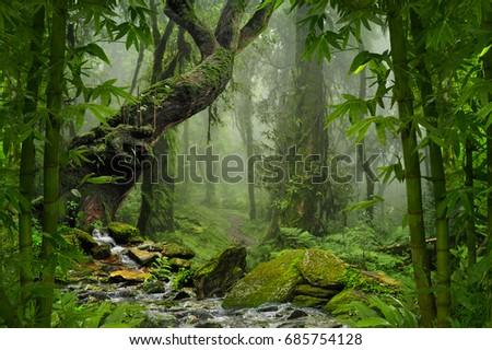 Tropical jungle #685754128