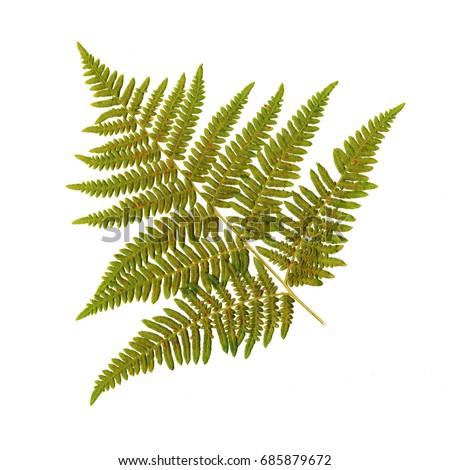 fern leaf #685879672
