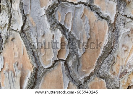 Old big pine tree bark with cracks and rifts  close up texture or background.  #685940245