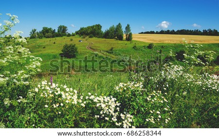Sunny countryside scene.Summer landscape with ground road and barley field. #686258344