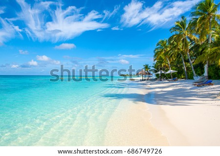 The beautiful landscape of the deserted Indian Ocean sandy beach, shaded by palm trees and tropical plants #686749726