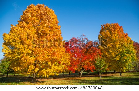Autumn foliage colors on trees in Wisconsin. #686769046