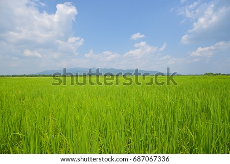 Green field with the sky and mountain #687067336